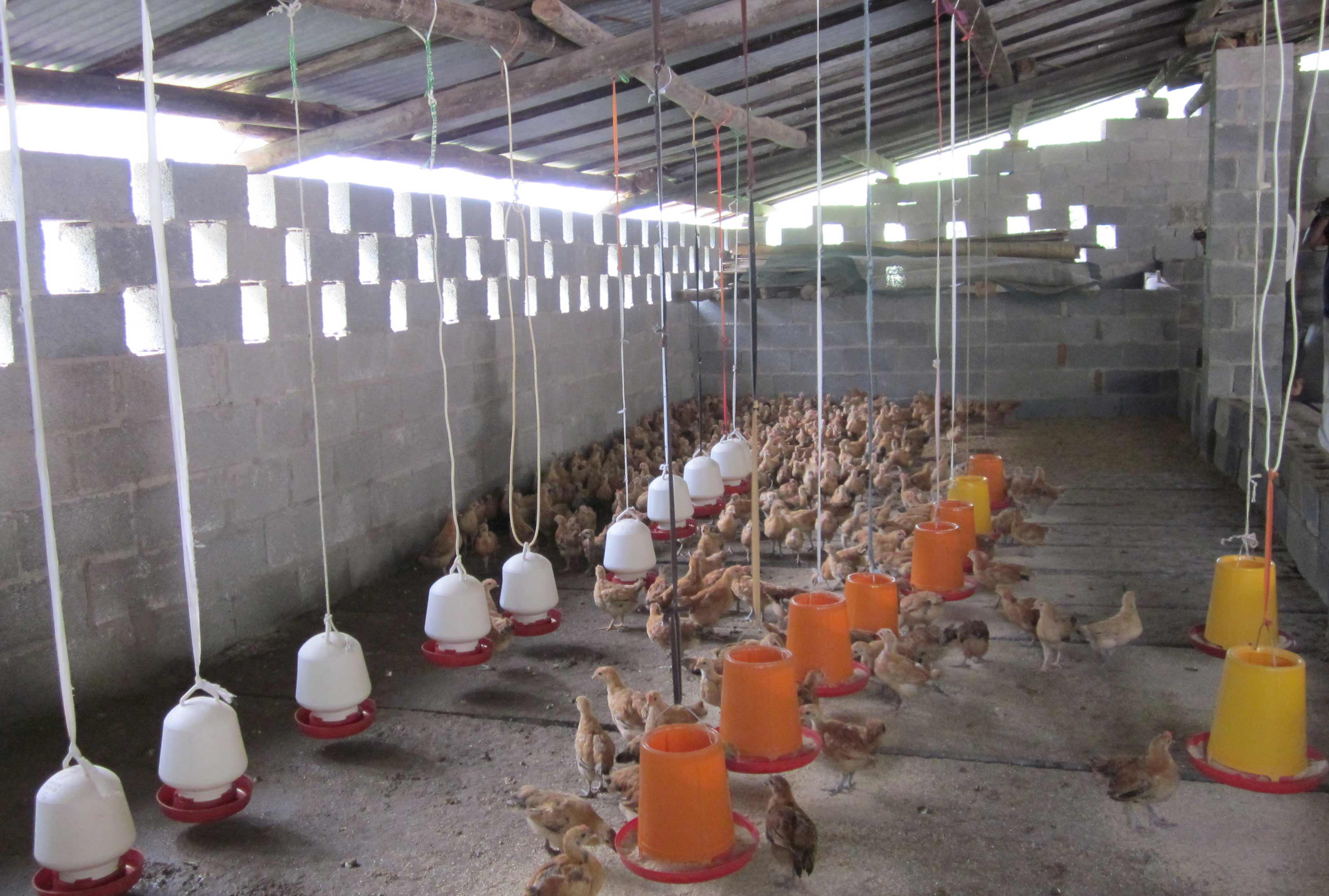 Duck Farming Guide For Beginners – Getting The Appropriate Poultry Farm Equipment