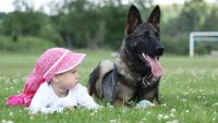 Large Dog Breeds The Whole Family Will Love