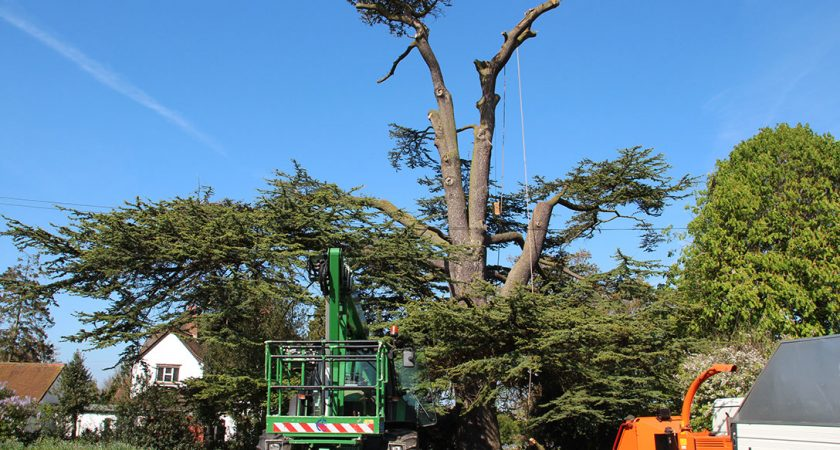 Why Skilled And Licensed Tree-Surgeons Are Being Hired?