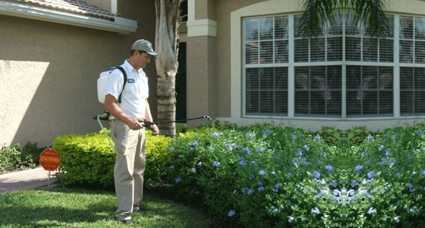 Pest Controllers- Keep Your Environment Healthy